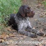 chiens-Chien-d-arret-allemand-a-poil-dur-d445825c-b607-2e84-095e-9c930f3058ec